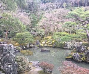 japan, kyoto, and spring image