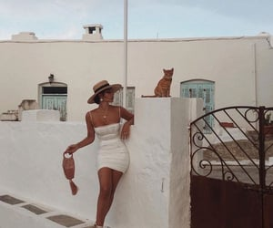 fashion, summer, and cat image