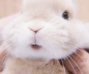 bunny, soft, and theme image