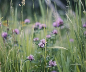 flowers, red clover, and naturecore image