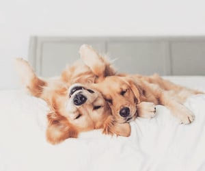 dog dogs, cute cuteness, and animals animal image
