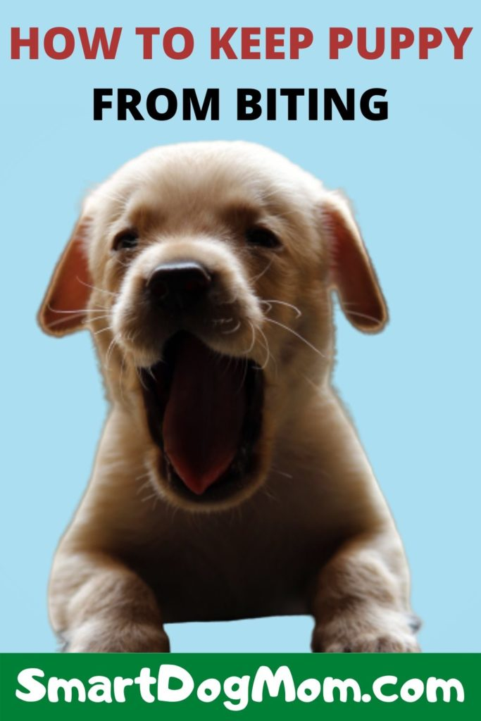 article, puppy training, and stop puppy biting fast image