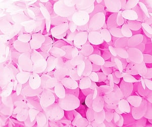 aesthetic, background, and floral image