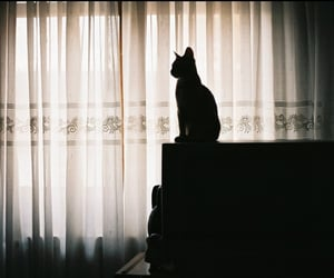 cat, 35mm, and 50mm image