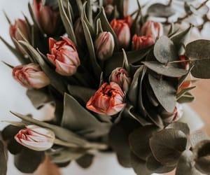 bloom, flowers, and minimal image