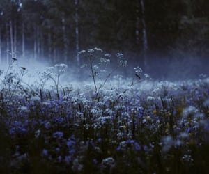 flowers, dark, and nature image