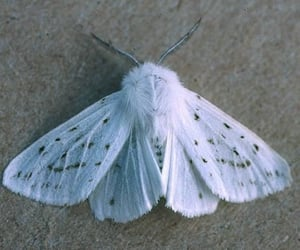 fluffy, moth, and white image