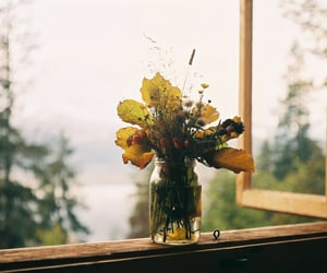 autumn, flowers, and window image