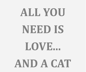 cat, cats, and text image