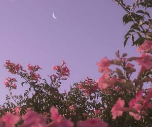 flowers, moon, and sky image