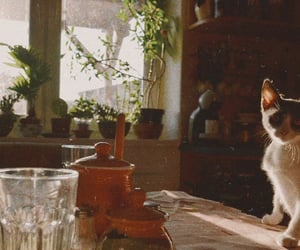 cat, home, and vintage image
