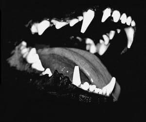 dog, black and white, and black image