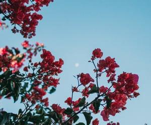 blue skies, flowers, and moon image