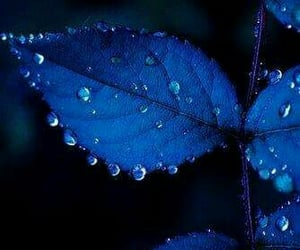 blue and nature image