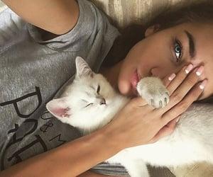 animals, kitties, and kitty image