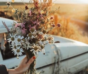 beautiful, bouquet, and daisies image