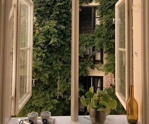 aesthetic, window, and plants image