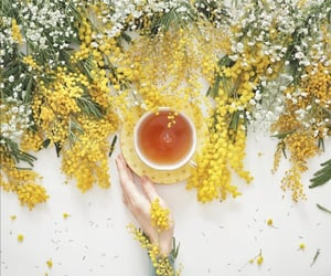 cup of tea, flowers, and mimosa image