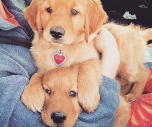 dog dogs, puppy puppies, and pet pets image