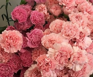 pink and flowers image