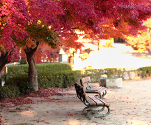beautiful, bench, and landscape image
