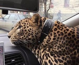 animal, car, and luxury image