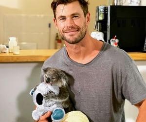 animal, Koala, and chris hemsworth image