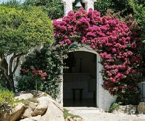 beautiful, travel, and flowers image