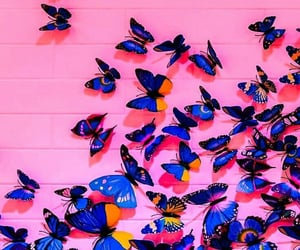 blue, butterfly, and pink image