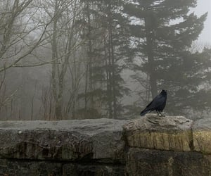 aesthetic, black, and crow image