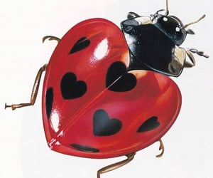 ladybug, hearts, and icon image