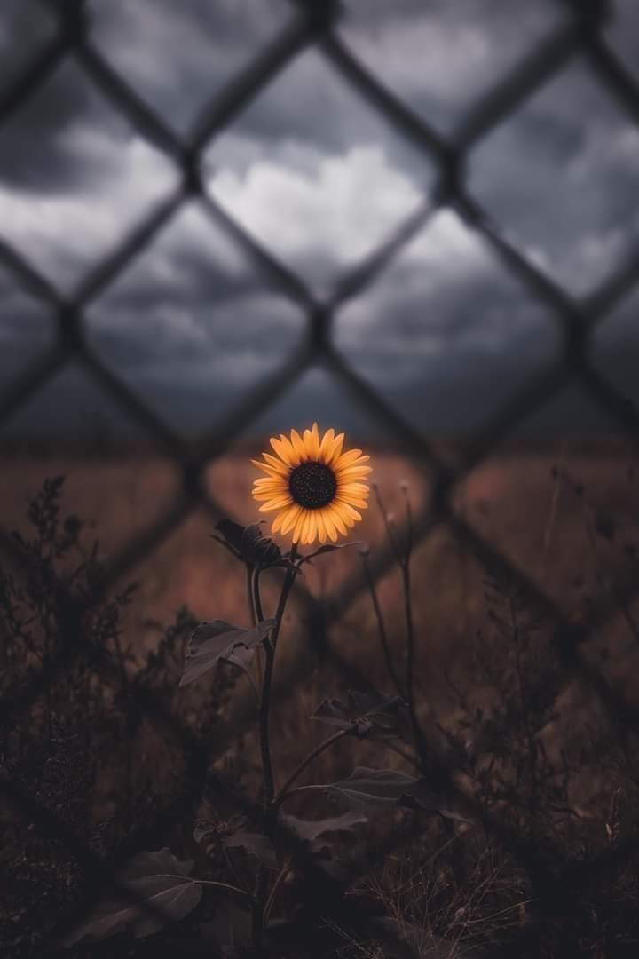 article, isolation, and world image