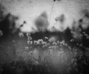 black&white, emotional, and flowers image