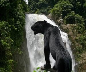 animal, nature, and jaguar image