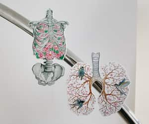 anatomical, etsy, and lungs image