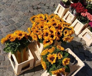 flowers, sunflower, and gift image