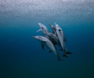 beauty, dolphins, and ocean image