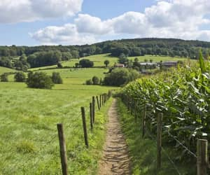 country life, country side, and farm life image