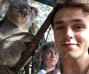 australia, jonah marais, and Koala image