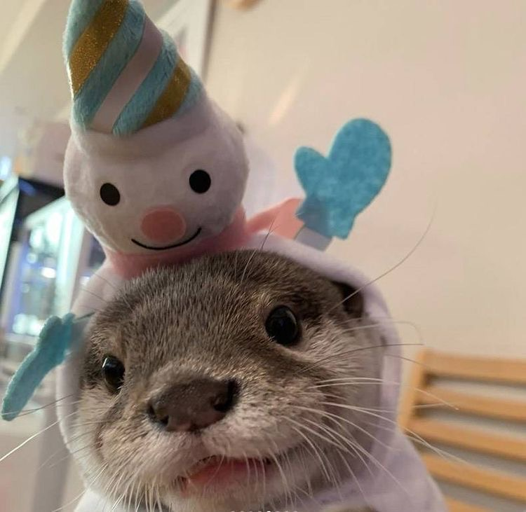 otter, animal, and cute image