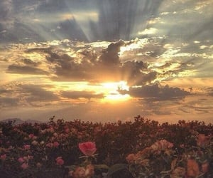 cloud, rose, and summer image