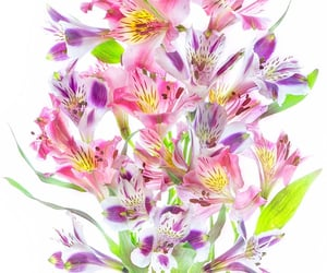 bouquet, flowers, and alstroemeria image
