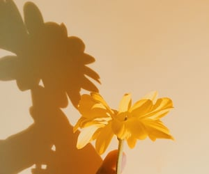 flower, life, and sun image