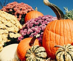 autumn, foliage, and october image