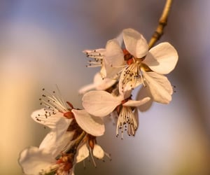 flowers, spring, and lockscreen image