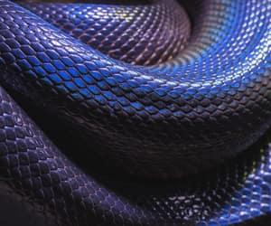 purple, snake, and snake skin image