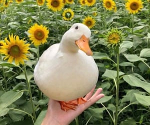 duck, animal, and flowers image