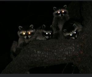 climb, raccoon, and trash image