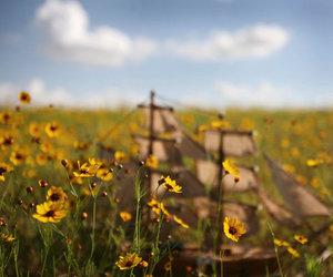 field, Samantha Lamb, and flowers image