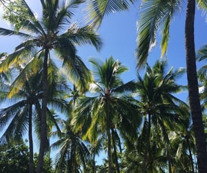 beach, palm tree, and travel image